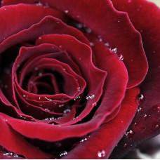 """""""Роза красная"""", косметическая отдушка для мыла"""